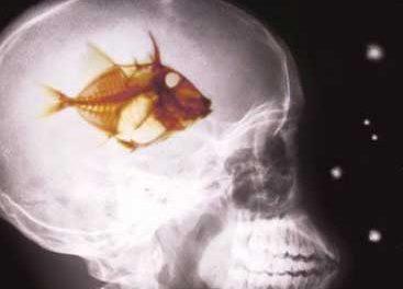 CSI Madrid: Autopsia al bipartidismo