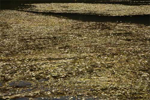 Martes Romántico: El río de las arenas de oro