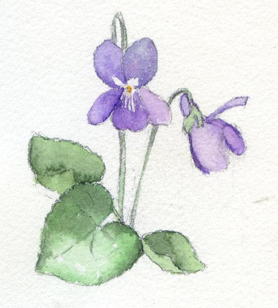 «La violeta» dice adiós a los Martes Románticos