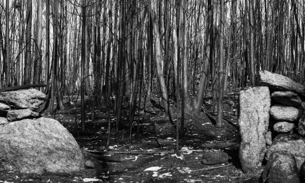 El incendio forestal como negocio