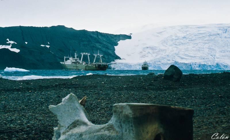 Pesqueros de la Expedicion fondeados en la Isla del Rey Jorge
