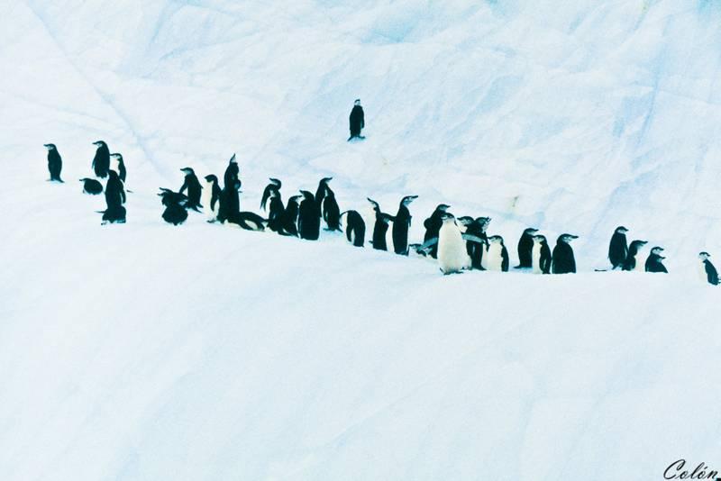 Pingüinos sobre iceberg