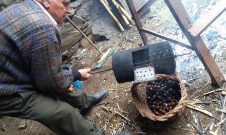 Lecio de Ancares: árbol de agua