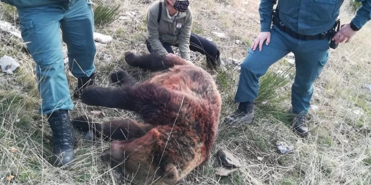 Cómo matar osos a cañonazos